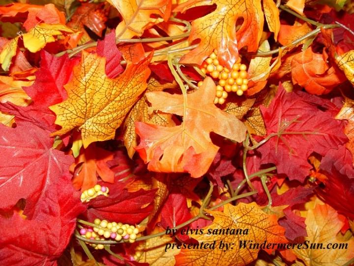 Fall (credit: elvis santana)