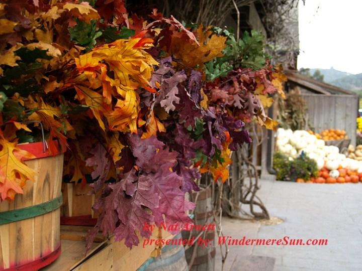 Fall Colors (credit: Nat Arnett)