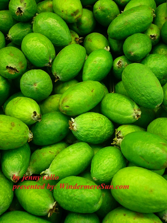 feijoas-1323202-freeimages-by-jenny-rollo-final