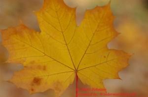 Leaf (credit: Nikki Johnson)