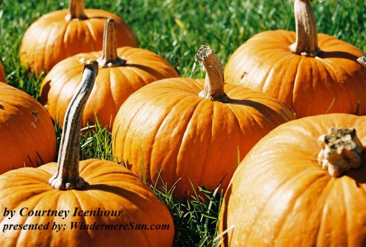 mini-pumpkins-1562846-freeimages-by-courtney-icenhour-final