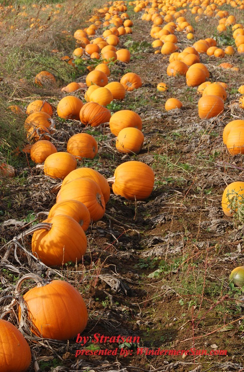 Pumpkin Patch (credit: Stratsan)