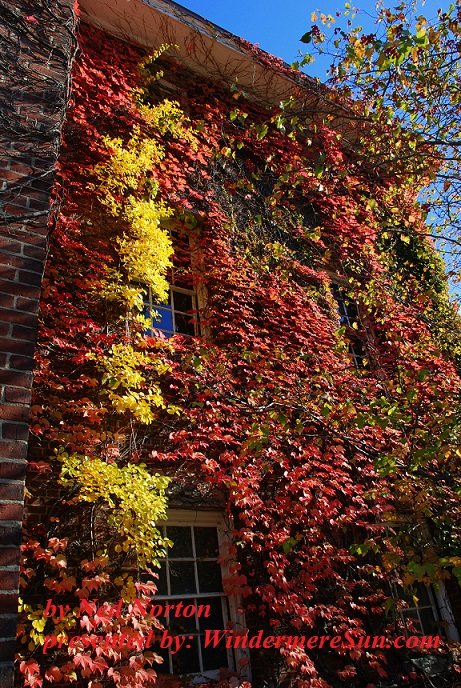 ivy-league-too-1208753, freeimages, by Ned Norton final