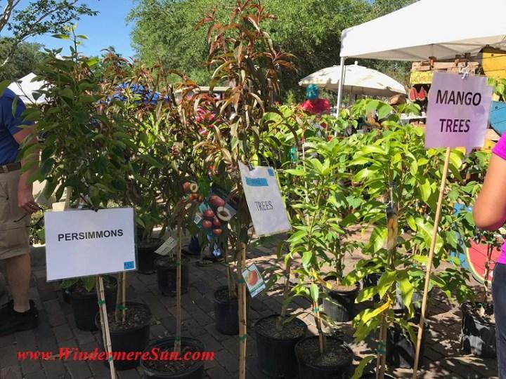 A Natural Farm-fruit trees final
