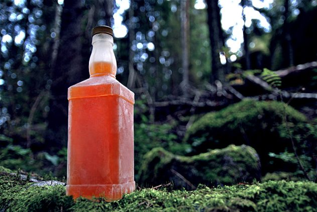 Spruce shoot liqueur recipe by Wind from the North