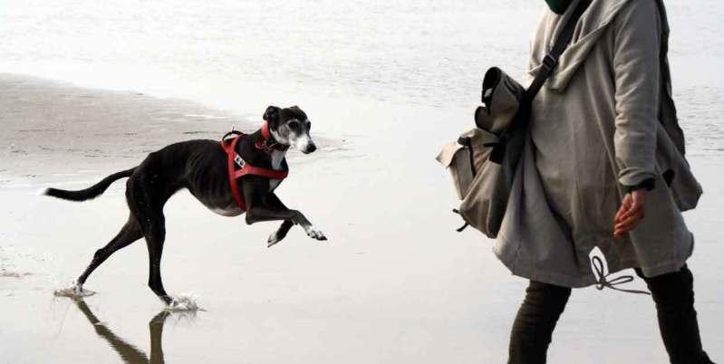 Wer führt ist zuverlässig, authentisch, klar, gibt Orientierung. Führungskompetenz des Hundehalters.