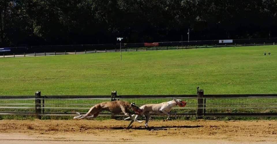 Ida und Happy Gosch, zwei Tierschutz-Galgos machen die Rennbahn zu ihrem Spielplatz