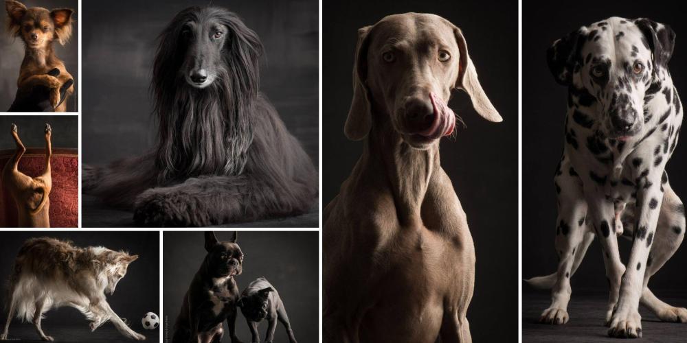 Paul Croes und Inge Nelis Hundefotografie