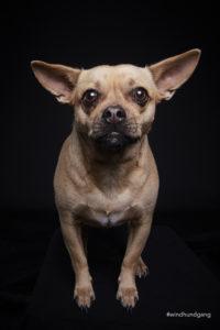 Hundefoto Kleiner Hund