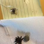 Spider Samples