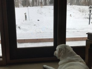 Abby alert