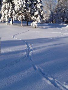 Line of deer trail in snow