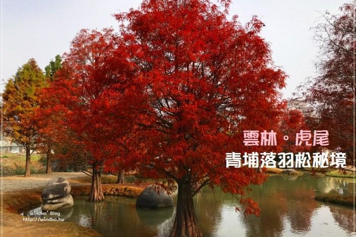 雲林景點∥ 虎尾青埔落羽松秘境森林 – 水池小丘搭染紅落羽松園區,免費景點