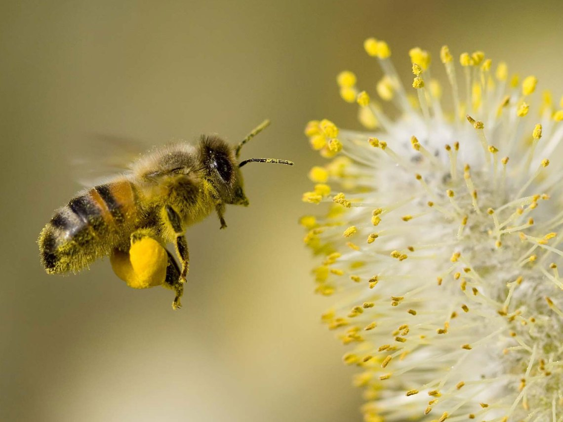 ... Everywhere Hay Fever | Windom Allergy, Asthma, & Sinus Specialists