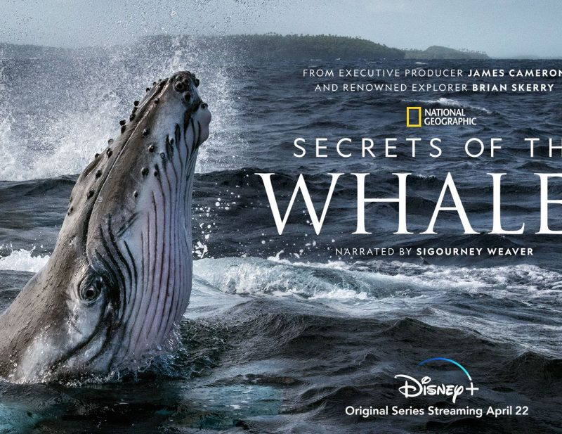 Exclusive: 'Secrets of the Whales' creator Brian Skerry on filming his stunning new docu-series for Nat Geo, ,