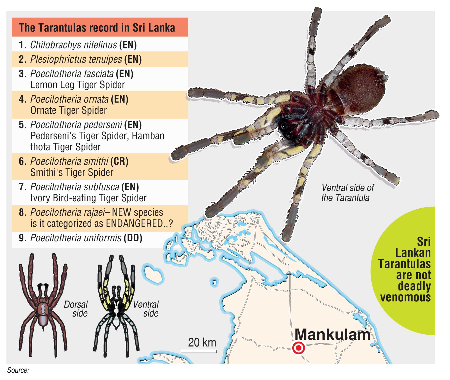 Pesticide Alternatives for Spiders and Tarantulas