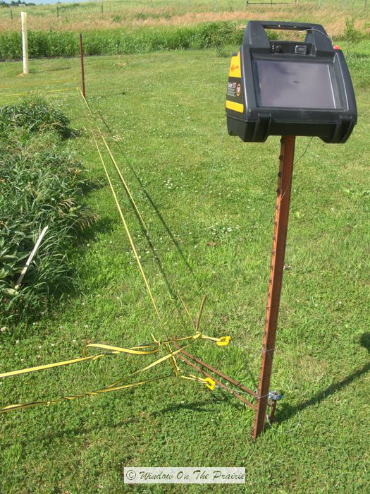 solar electric fence garden