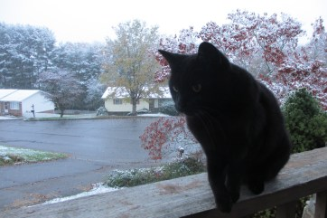 SALEM STARING AT A BIRD IN THE SNOW!