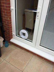 cat flap in a double glazed door