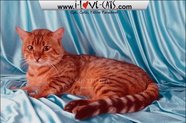 download adorable cats screensaver