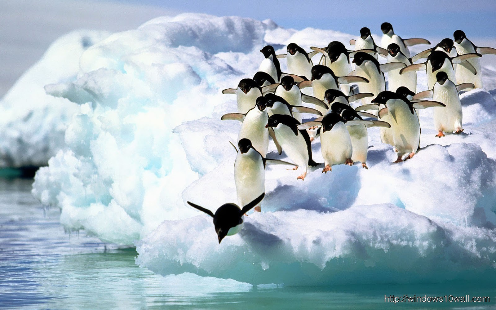 Falling Snow Live Wallpaper Iphone Penguins Jumping In Lake Hd Wallpaper Windows 10 Wallpapers