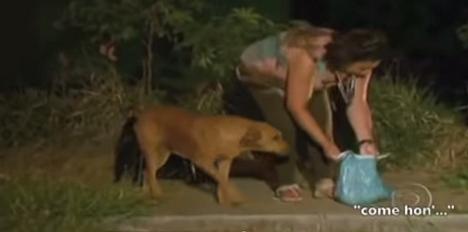 lilica busca comida para otros animales abandonados