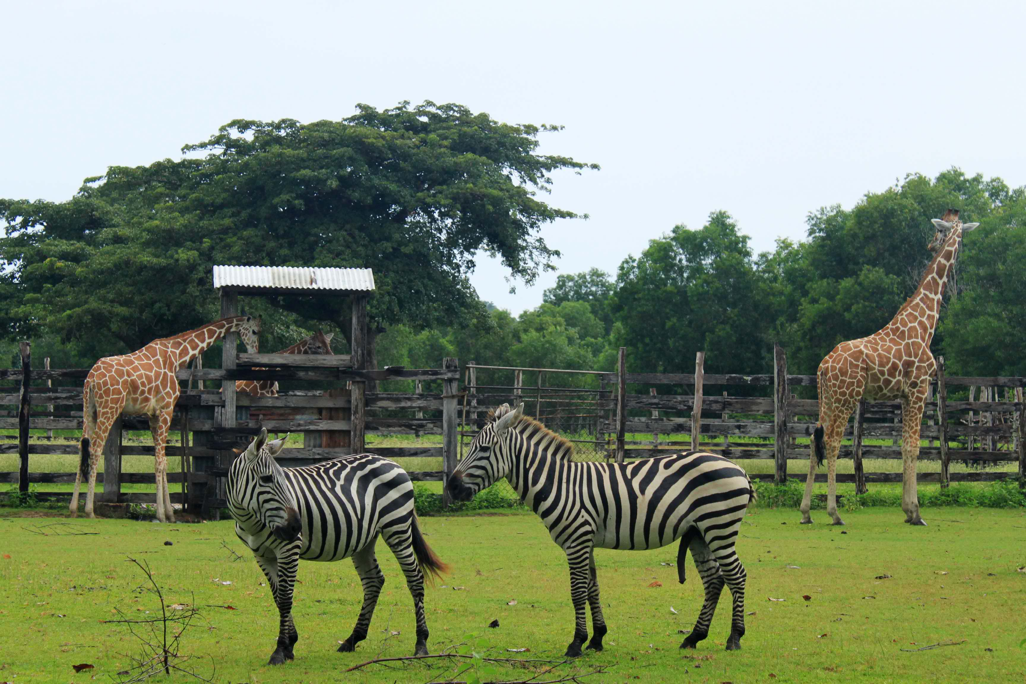 Calauit_Safari_Park_original_16435