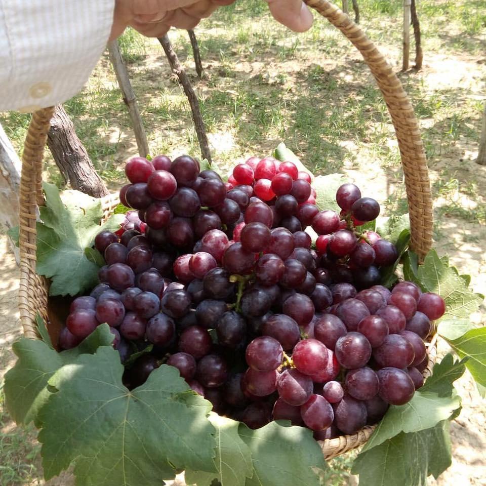 la union grapes