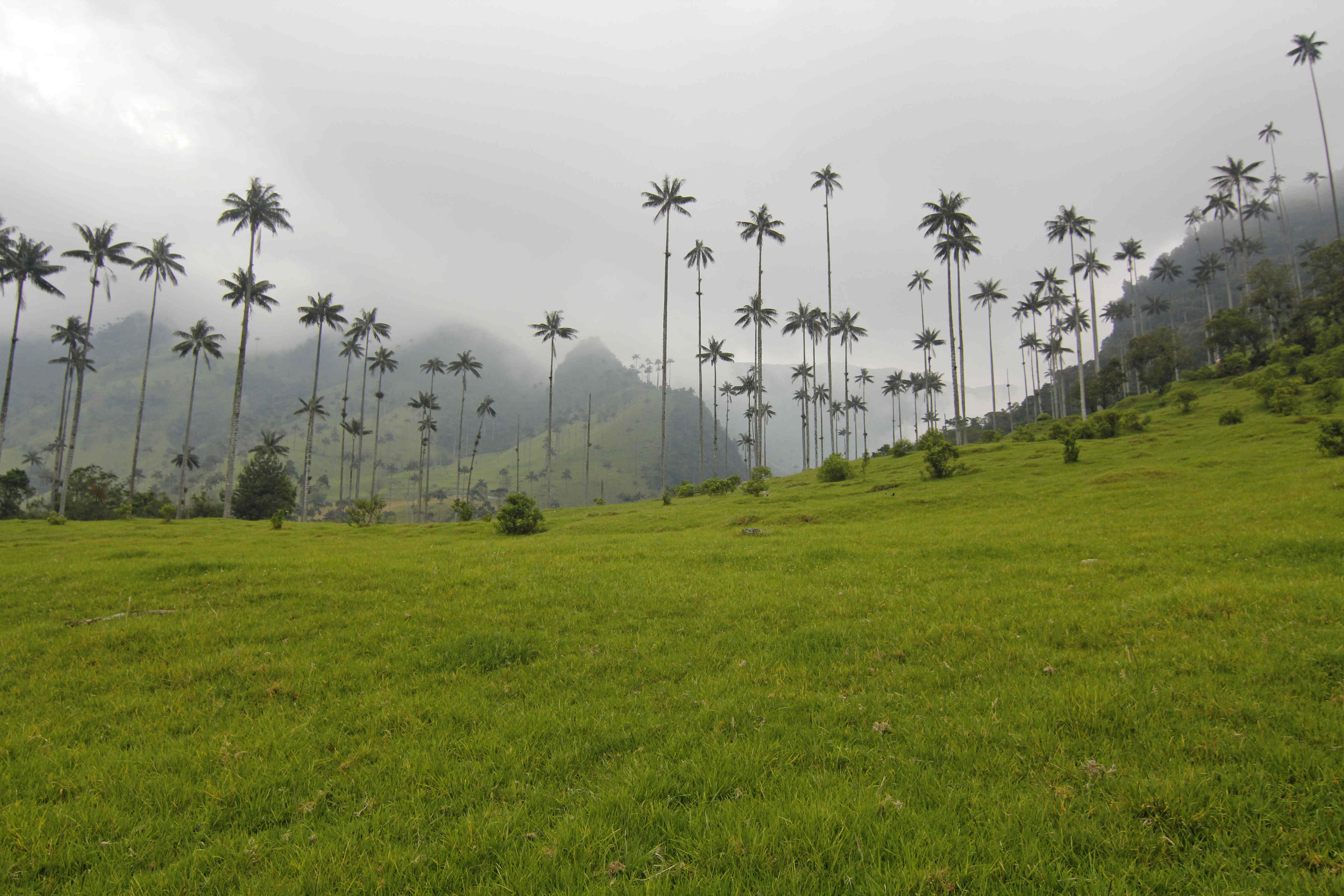 descrubriendoelmundo-cocora-valley