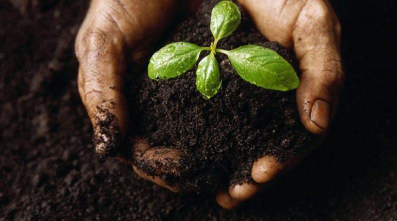 humus sebagai salah satu media tanam untuk tanaman pot