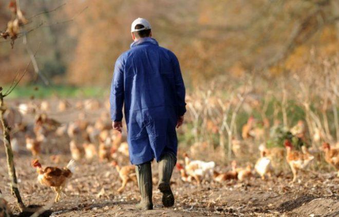 Profesi peternak yang cukup sibuk