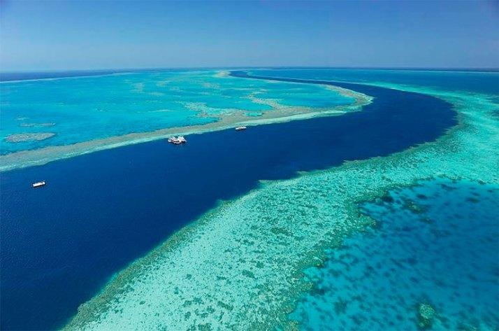 contoh batuan karang