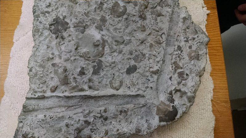 batuan sedimen organik karbonat