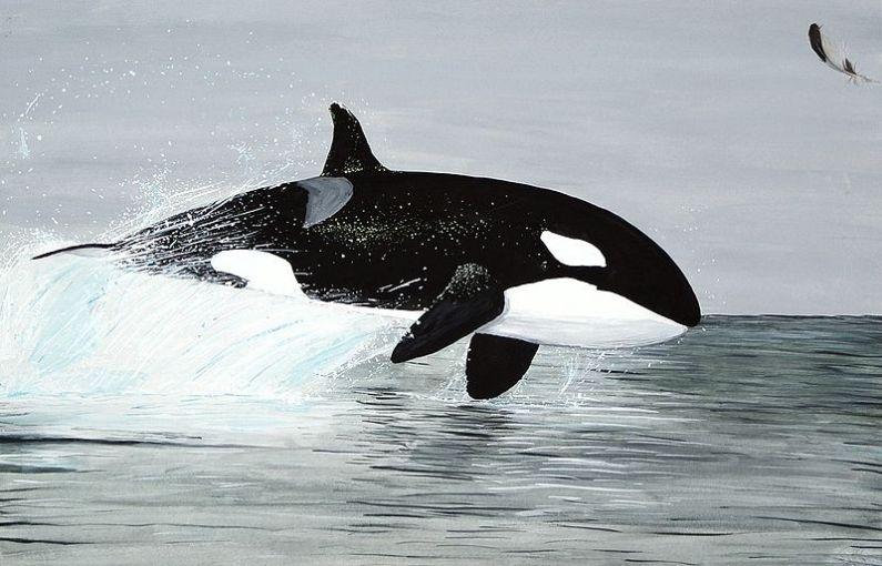 ikan paus pembunuh