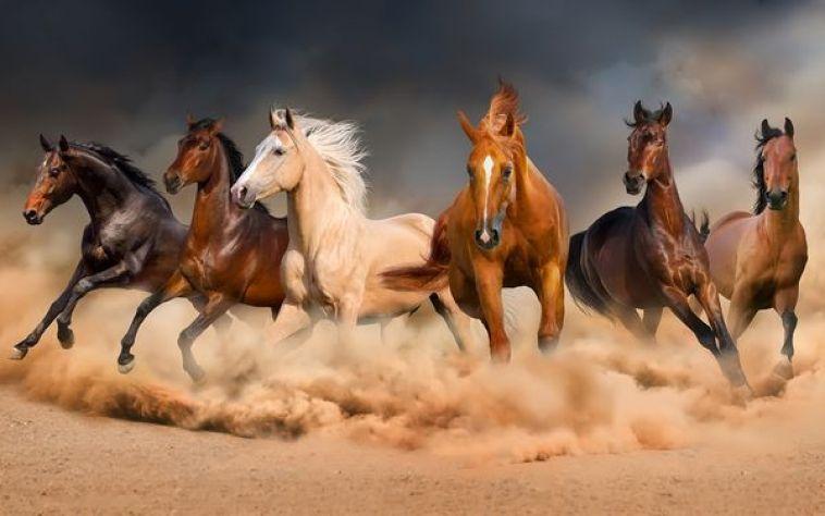 kuda di kepulan debu
