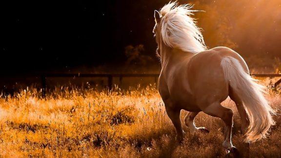 kuda bergerak menjauh