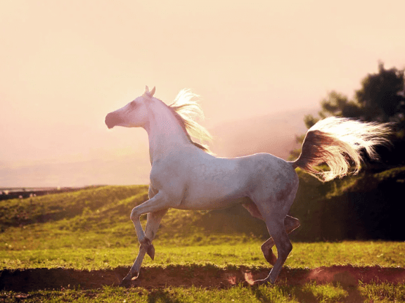 kerjaran kuda