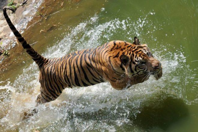 di Ragunan Zoo
