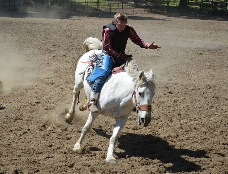 50 Gambar Kuda Poni Lari Kawin Kuda Nil Kartun Kuda