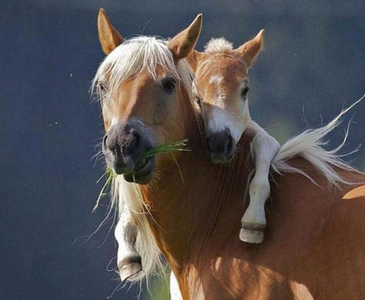 kuda dan anaknya