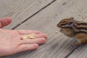 Hokkaido wildlife