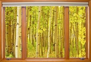 Autumn Aspen Picture Window Frame View
