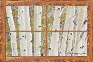 Winter Aspen Tree Forest Barn Wood Picture Window Frame View