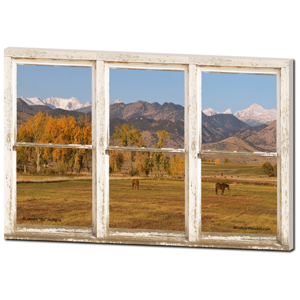 Window Views Of Horses