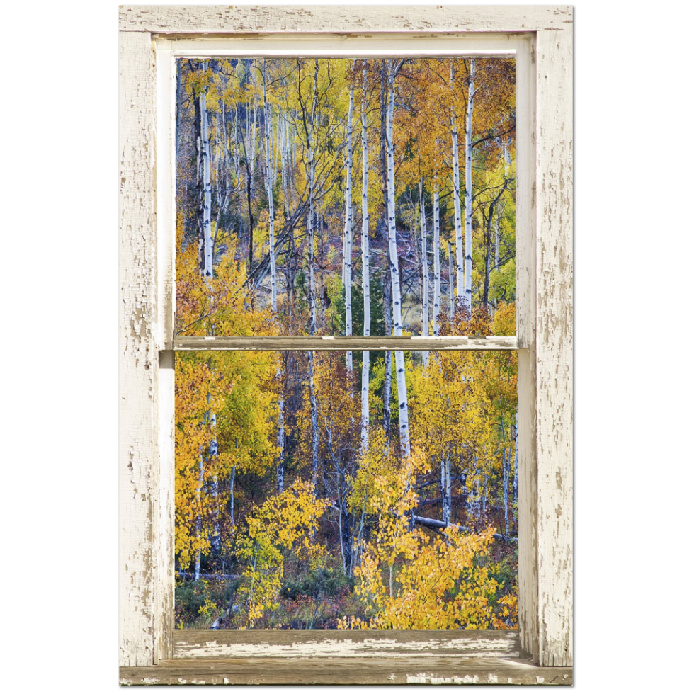 "Aspen Tree Magic Cottonwood Pass White Rustic Window Art 24""x36""x1.25"" Premium Canvas Gallery Wrap"