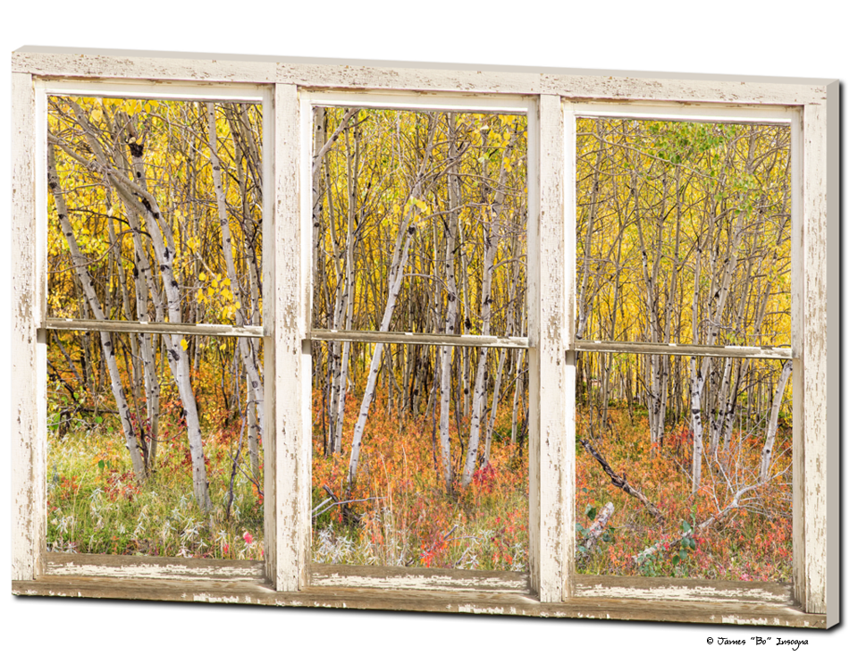 "Colorful Aspen Tree Forest White Rustic Panorama Window 32""x48""x1.25"" Premium Canvas Wrap Art"