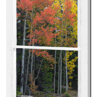 Forest Red Rustic Whitewashed Window View 24×36 Premium Canvas Gallery Wrap