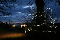 Fairy lights in the night