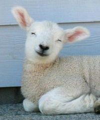 021917-lamb-smile