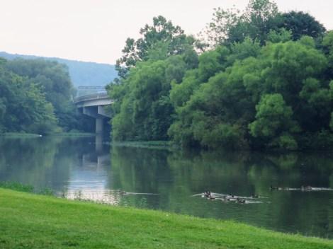 河边的鸭子
